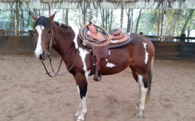 La chute en équitation