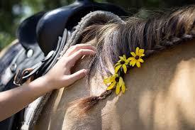 Coronavirus : de l'accès aux chevaux