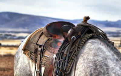 Le cheval, une mobylette ?